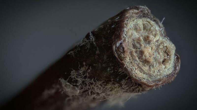 Яблочный стебель в мире, красота, макро, под микроскопом, познавательно, удивительно, фото