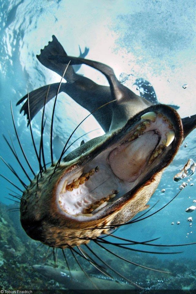 25 пугающих фотографий из мира природы, глядя на которые так и хочется перекреститься