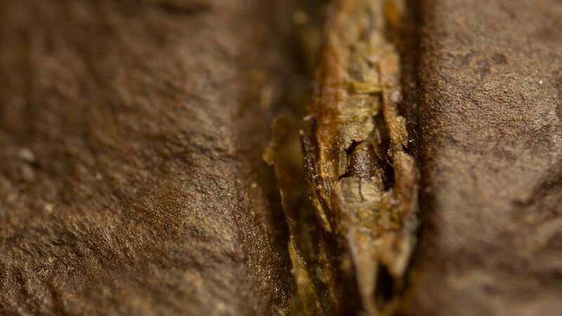 Кофейное зерно в мире, красота, макро, под микроскопом, познавательно, удивительно, фото