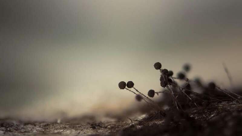 Плесень на чёрном хлебе в мире, красота, макро, под микроскопом, познавательно, удивительно, фото