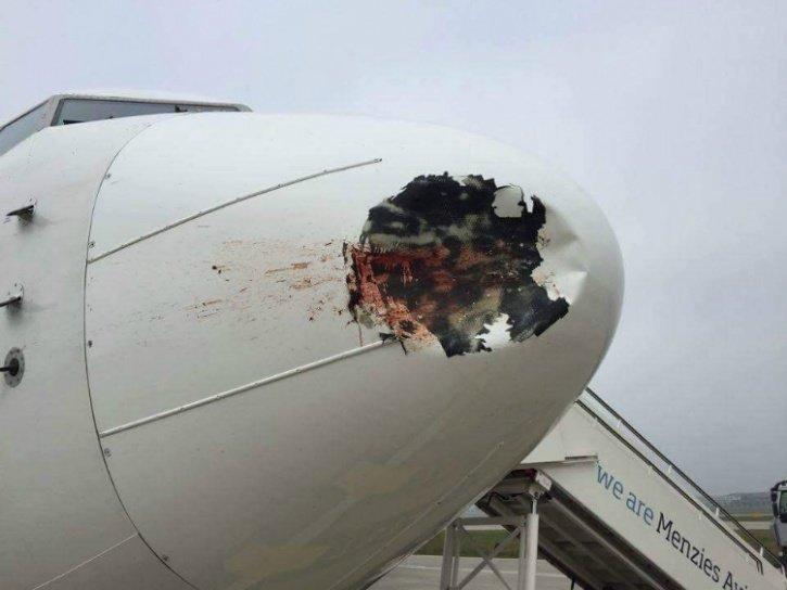 5. Вот еще пример свидания с пернатыми авиарейсы, пассажирский самолет получил повреждения, самолеты, фото, экстренная посадка