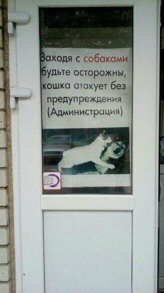 18. Собакам тоже периодически достается животные, кот, кошка, месть, прикол, смех, хулиган, юмор