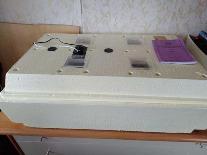 Пара из Москвы решила проверить, что получится, если положить обычные перепелиные яйца из «Ашана» в инкубатор