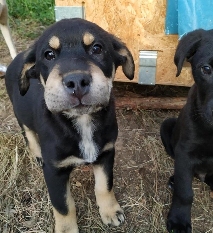 18 собак, которые пытались быть хорошими мальчиками. Но у них не получилось
