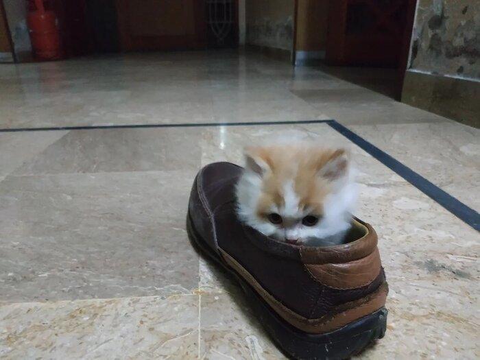 9. До утилизации ботинка...3...2...1... животные, кот, кошка, месть, прикол, смех, хулиган, юмор