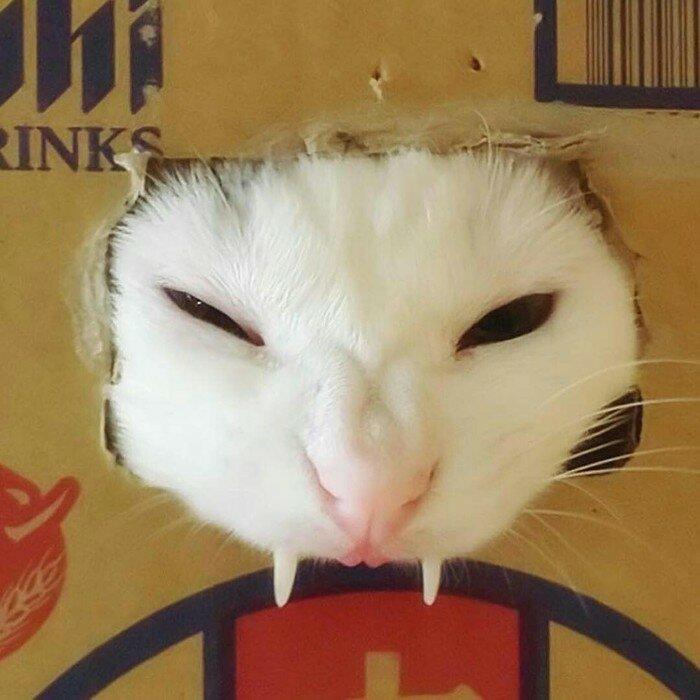 10. Срочно вызывайте экзорциста животные, кот, кошка, месть, прикол, смех, хулиган, юмор