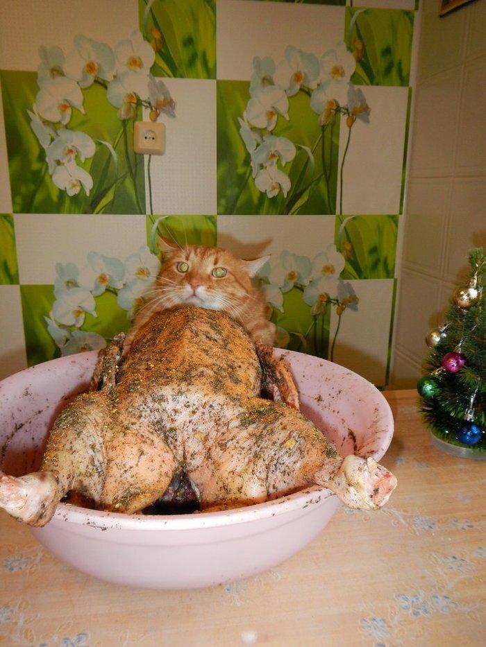 3. Человек, фото удалил быстро! животные, кот, кошка, месть, прикол, смех, хулиган, юмор
