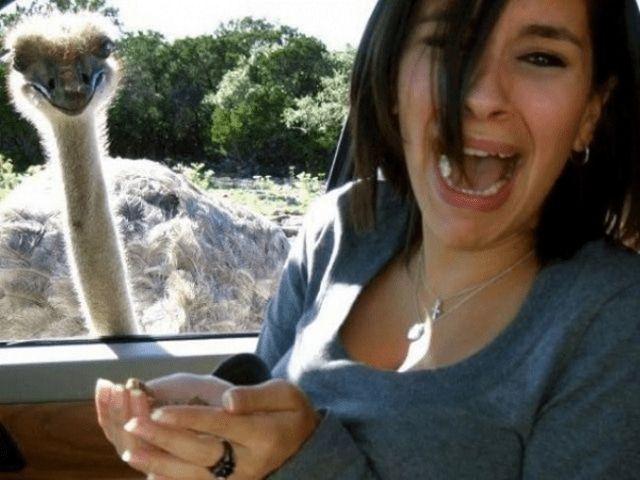 Дружба со страусом