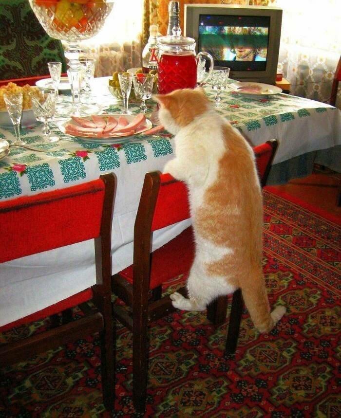 6. животные, кот, кошка, месть, прикол, смех, хулиган, юмор