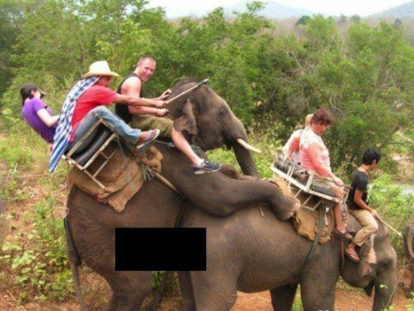 Интим слонов