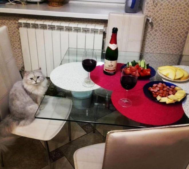 кошка не понимает