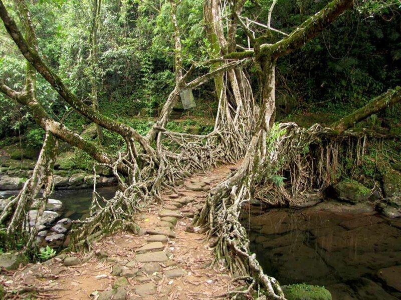 9. В индийском городе Черапунджи есть подвесные мосты из корней, созданные практически самой природой. Племена народа кхаси, которые проживают на этой территории, возделывают живые мосты. Первые упоминания о подобных сооружениях датируются 1844 годом интересно, любопытно, обо всем на свете, полезно, прикольно, факты, фото