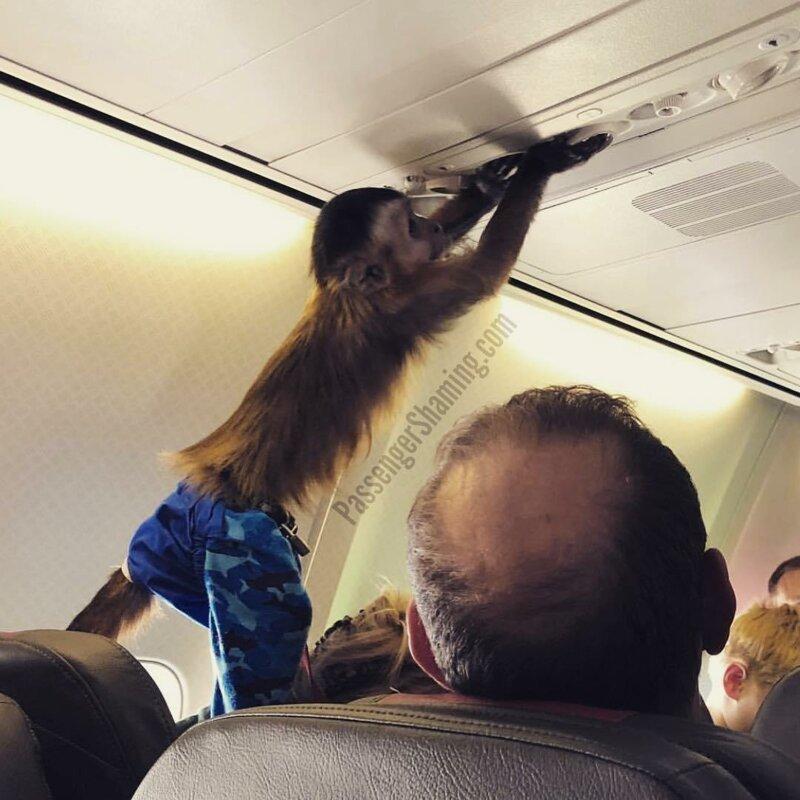 4. Милое создание, конечно, но за ним глаз да глаз нужен животные, неприятность, перелет, путешествие, самолет, соседи
