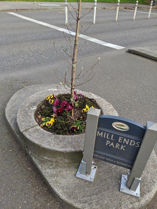 Самый маленький в мире городской парк, расположенный в Портленде, штат Орегон интересно, красиво, фото