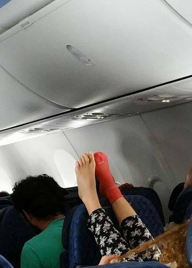 14. На то, чтобы снять второй носок, сил не осталось животные, неприятность, перелет, путешествие, самолет, соседи