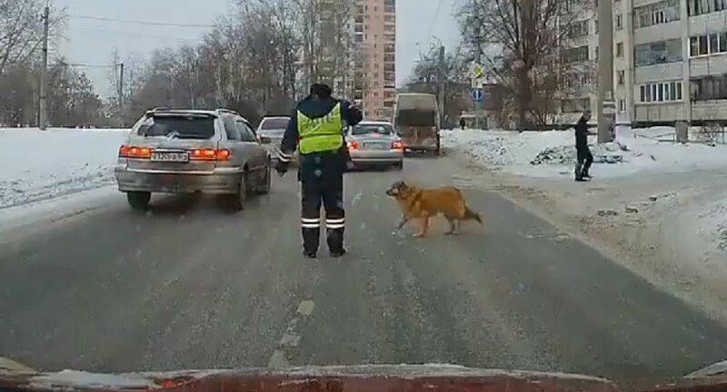 Или следить за тем как переходит дорогу собака доброта, люди, форма, человечность