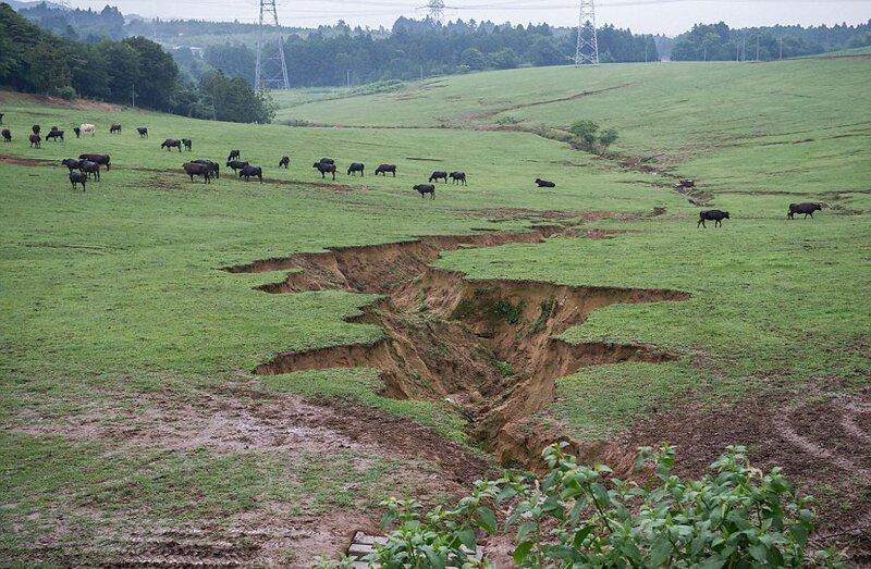 Следы землетрясения, предшествующего цунами и аварии на АЭС. Скот принадлежит местному фермеру Масами Уошижава, который рискнул вернуться в эти места после катастрофы АЭС Фукусима-1, аэс, зона отчуждения, катастрофа, последствия, фото, фотограф, фукусима