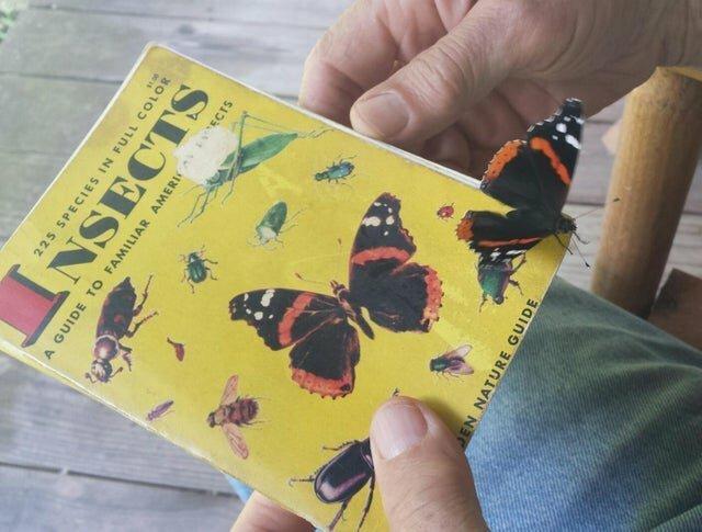 """1. """"Когда я смотрел брошюру с насекомыми, на нее села бабочка"""" прикол, случайные совпадения, совпадения, совпало, фото, юмор"""
