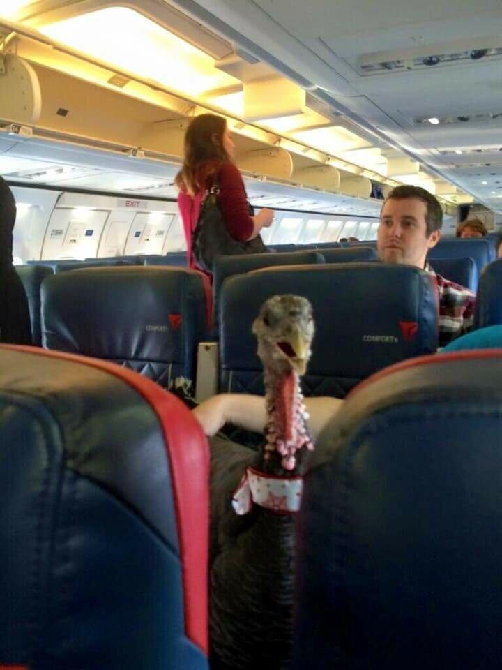 19. Один из самых необычных пассажиров животные, неприятность, перелет, путешествие, самолет, соседи