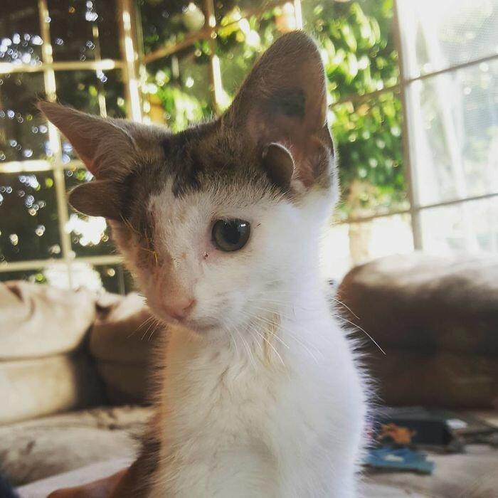 Котенок с четырьмя ушками и без глаза не верил, что кто-то его полюбит добрые люди, животные, истории, истории спасения, история спасения, коты, котята, кошки