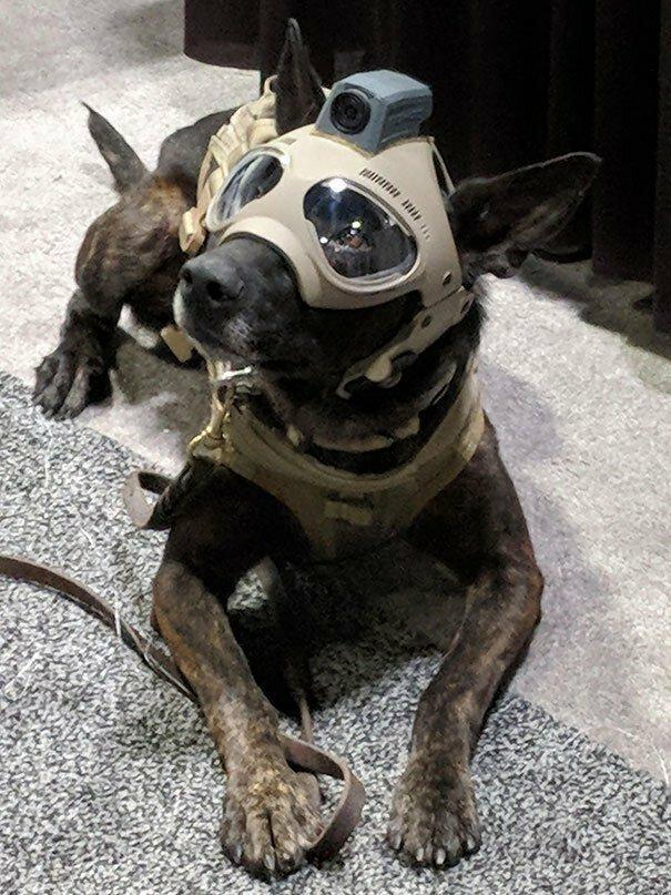 8. Тактические собачьи шлемы уже существуют будущее, гении, машина времени, находчивость, смекалка, технологии