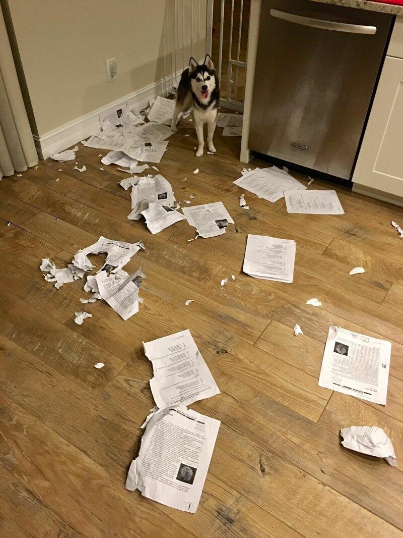 1. Все еще думаешь, что препод поверит, что собака съела домашку? да ладно, и такое бывает, прикол, смешно, тебе никто не поверит, фото, это невозможно