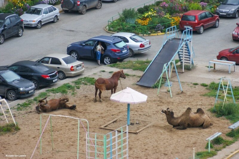 5. И кто говорил, что в России по улицам ходят только медведи?
