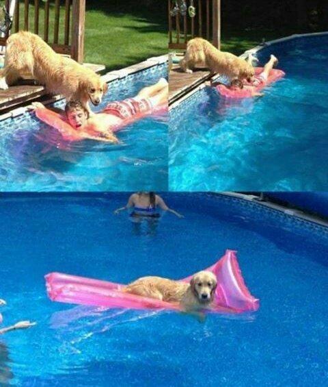 10. Собака знает, что такое доминирование везение, вода, дети, змеи, и смех и грех, неприятность, происшествие