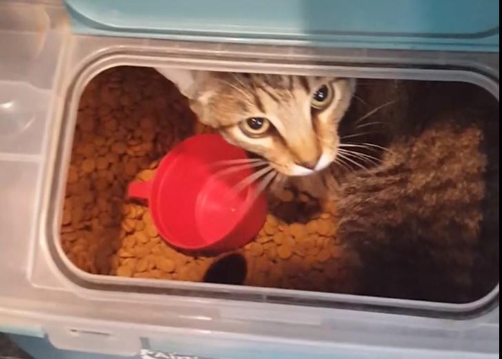 20 мурчащих номинантов на звание самого пакостного кота года