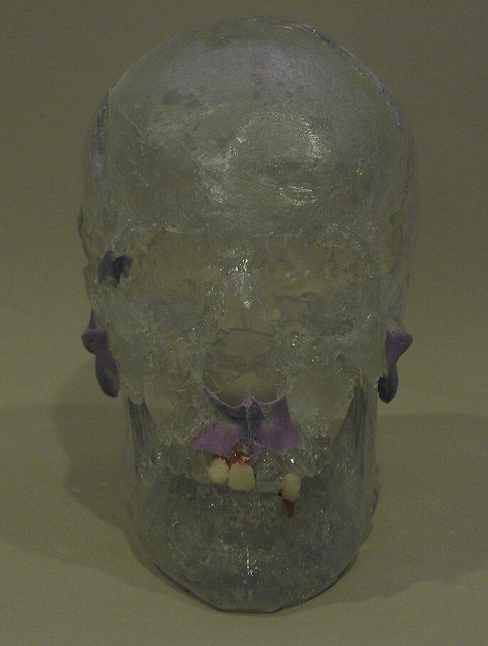 """Копия черепа, на которую """"наращивались"""" мышцы"""