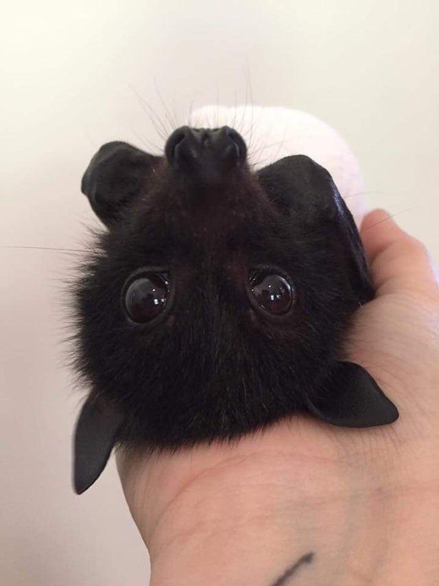 15 невероятных кадров с летучими мышами и их рукокрылыми родственниками
