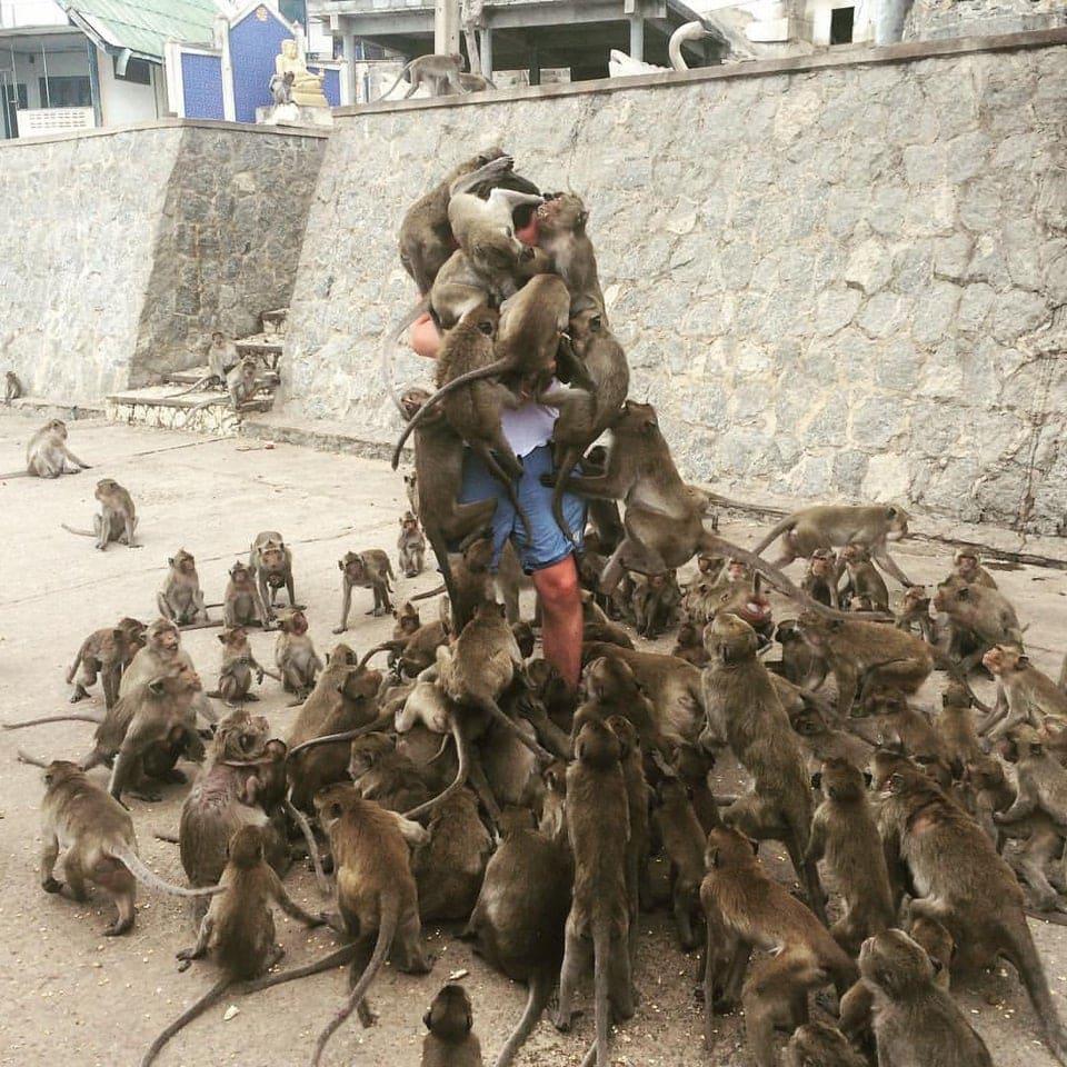 10 снимков показывают диких животных, которые стали жителями городов, как голуби
