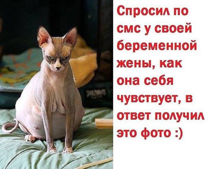 30108568851_e97d9b9001_o